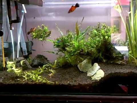 Aquascape Pemula Indonesia Home Ideas Style Concepts For Garden