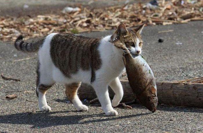 Gambar Kucing Lagi Makan godean.web.id