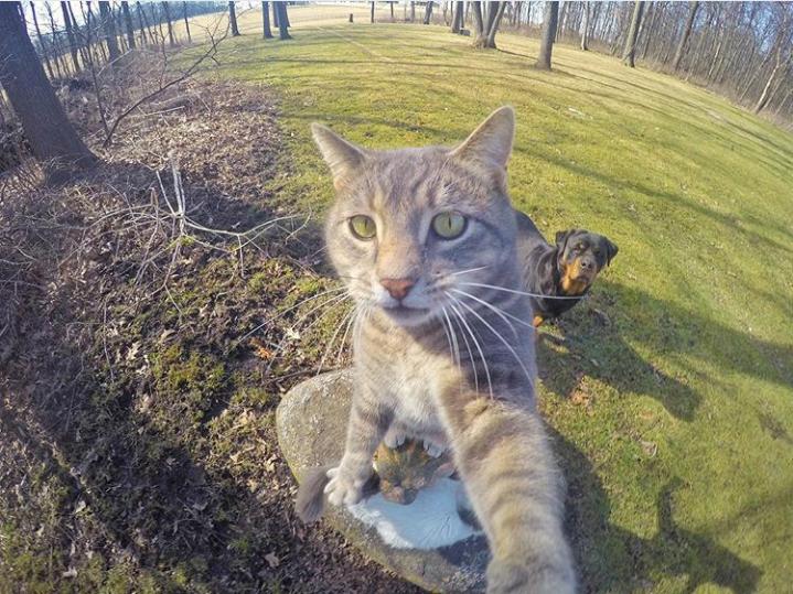 Trend Foto Kucing Selfie Dengan Go Pro | KASKUS