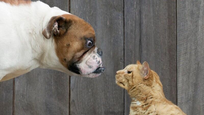 Si Anjing Dilarikan Ke Rumah Sakit Usai Lawan Seekor Kucing Kaskus