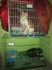 kandang + kucing + perlengkapan