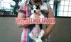 Jual Anak Anjing Siberian Husky (Blue Eyes,Big Bones)