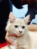WTS kucing persia medium 3 bulan+kandang bandung