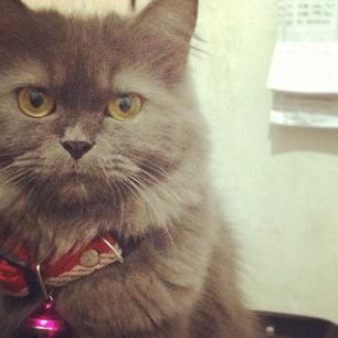10 Kisah Kucing Yang Mengagumkan