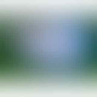 ikan-cupang-giant-blue-rim-betina