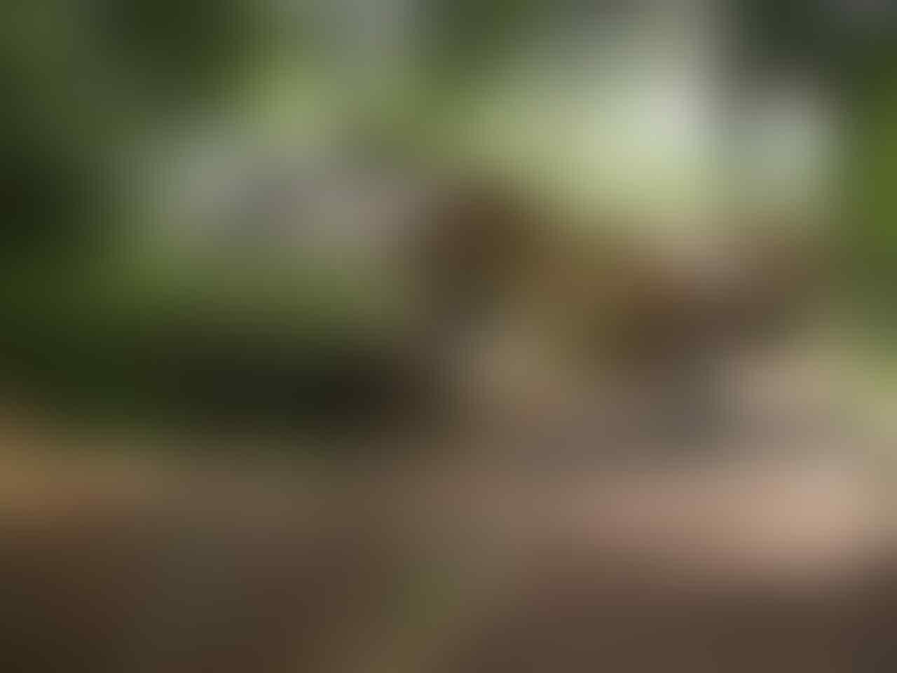 Kehebatan Spidercam/Skycam