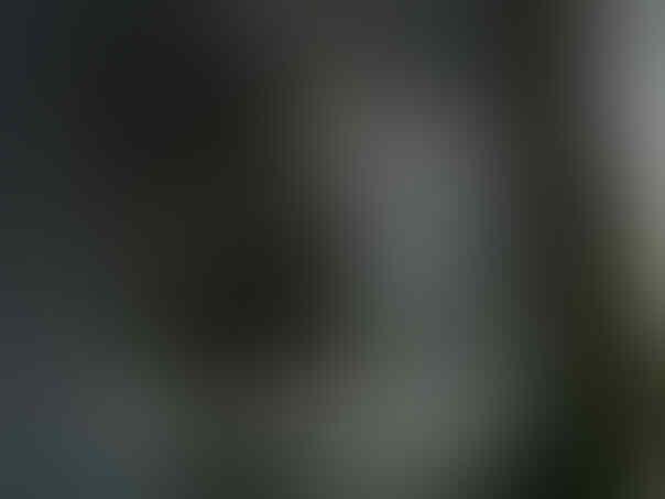 LEBARAN SALE & SPECIAL PRICE BRANDED GOALKEEPER GLOVES