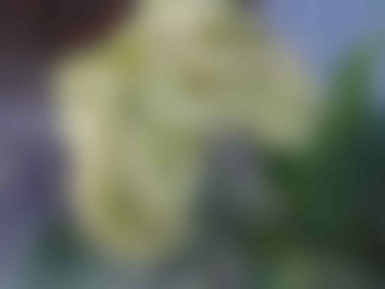 SONY ERICSON VIVAZ U5 kamere 8 Mpx JOGJA