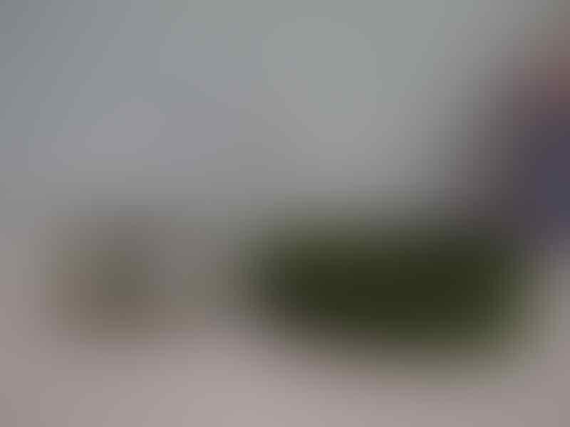 Sabuk Spyderbilt new rare ori 100 % MEN BELT dijamin bahan rubber TERMURAH