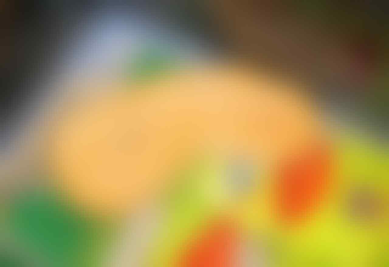 GREEN BURMESE - ALBINO