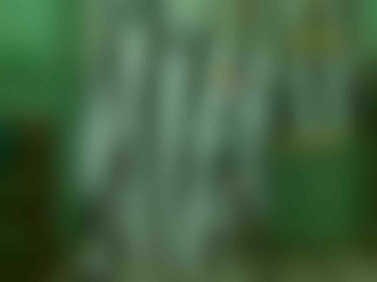 RUMAH JUVENTINI:GRADEORI@1454Rb,CELANA KW@654Rb,JUMPER BABY,OLD JERSEY,etc ABOUT JUVE