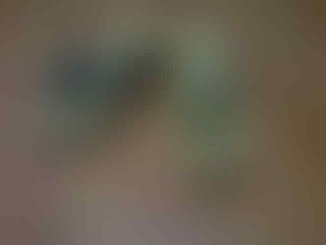 NEW ARRIVAL MICHELLE.CLA SHOES FEB'2013