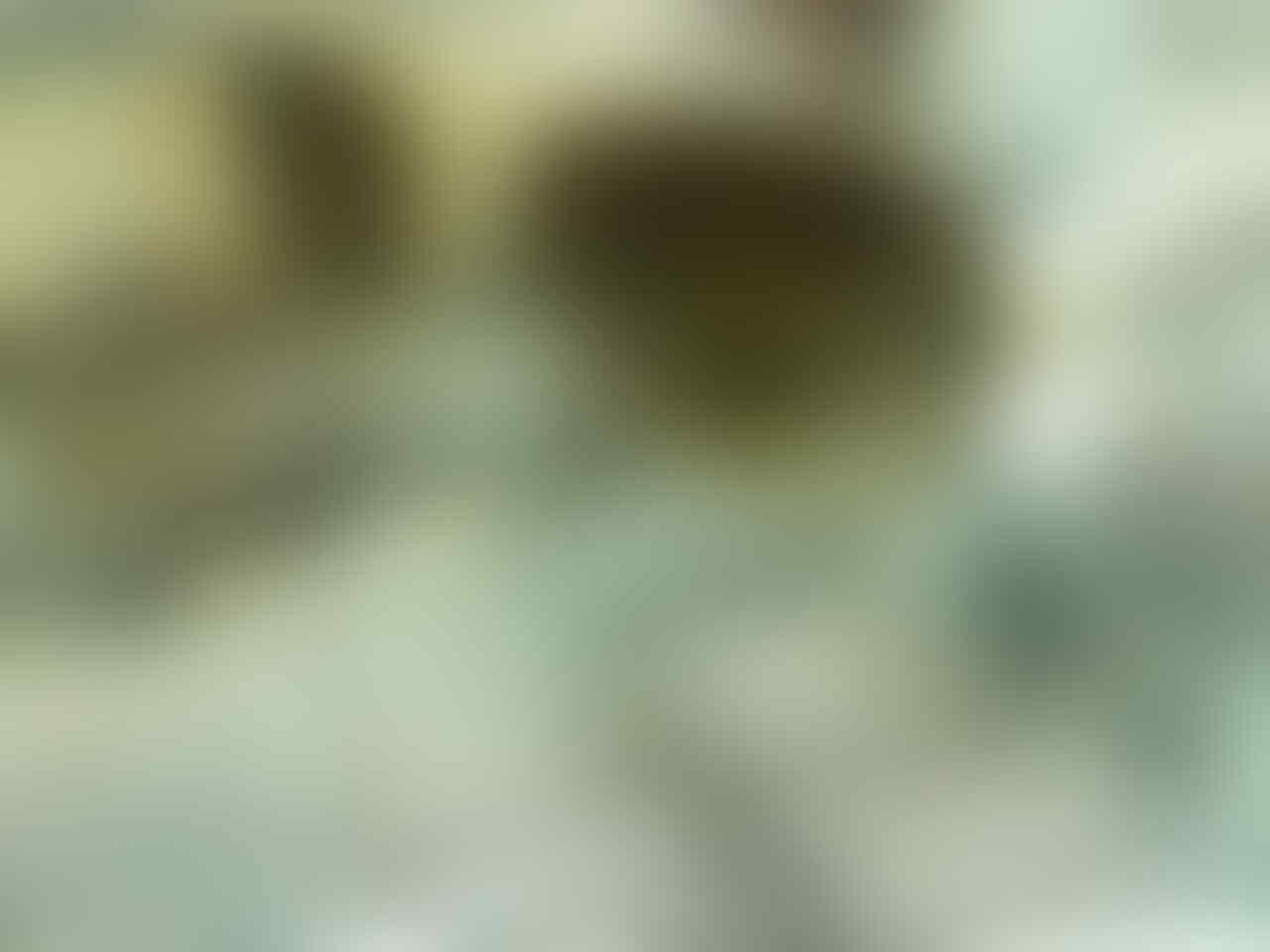 d450ff56b2c45 italy jual rayban wayfarer kw super kaskus 85a30 e3cde