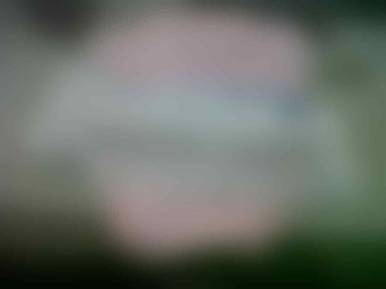 Barter Samsung Galaxy ACE 2/BB Monza ente dengan Kucing Persia Kitten Ane Serang
