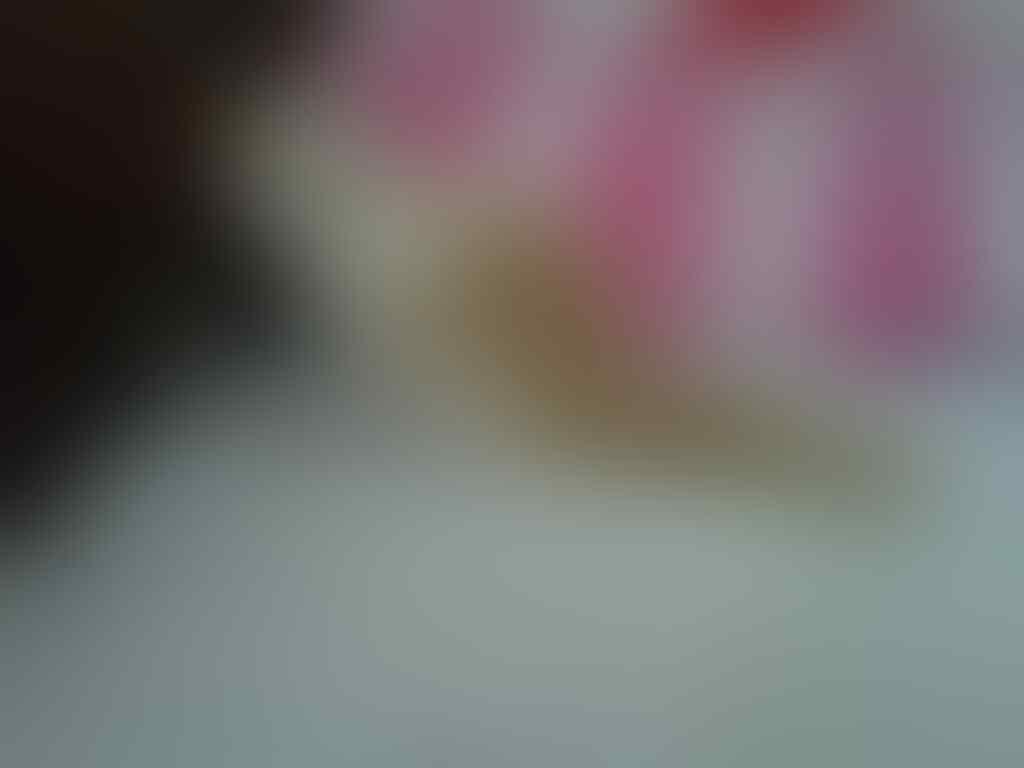 Kucing Persia, Peaknose, Flatnose & Medium SOLO