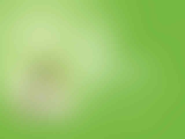 NEW - Lucky Four Leaf Clover Accessories pembawa keberuntungan!