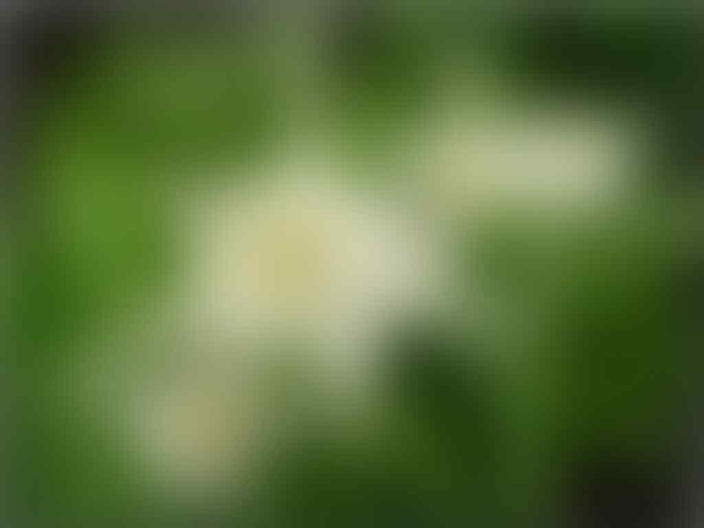 Download 7000 Wallpaper Bunga Edelweis Hd HD