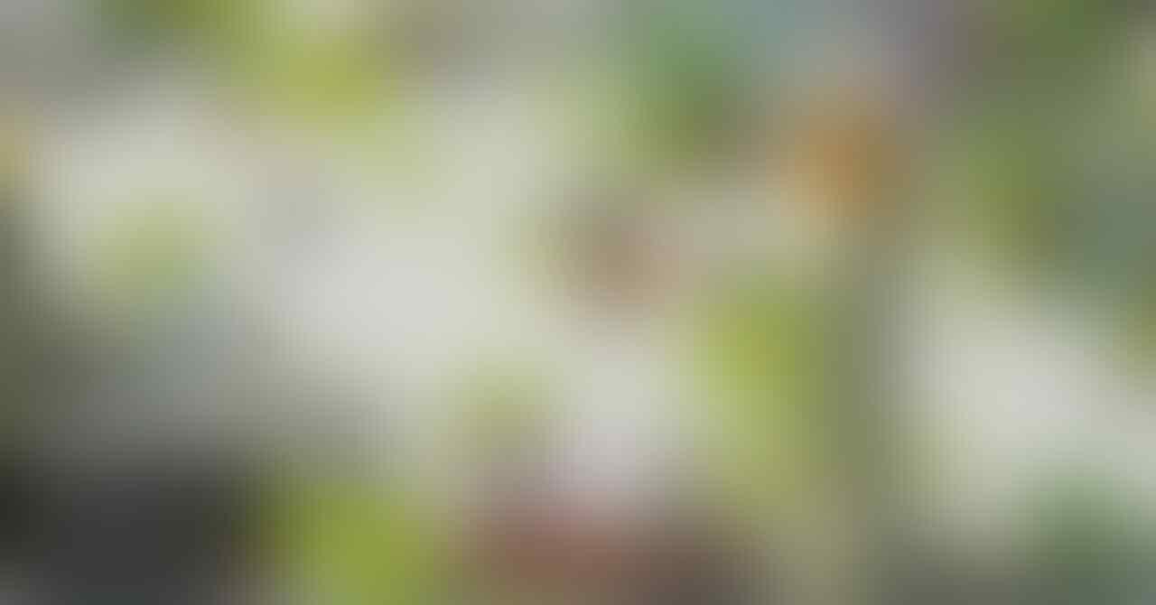 [New - ActionRPG] Pockie Saints