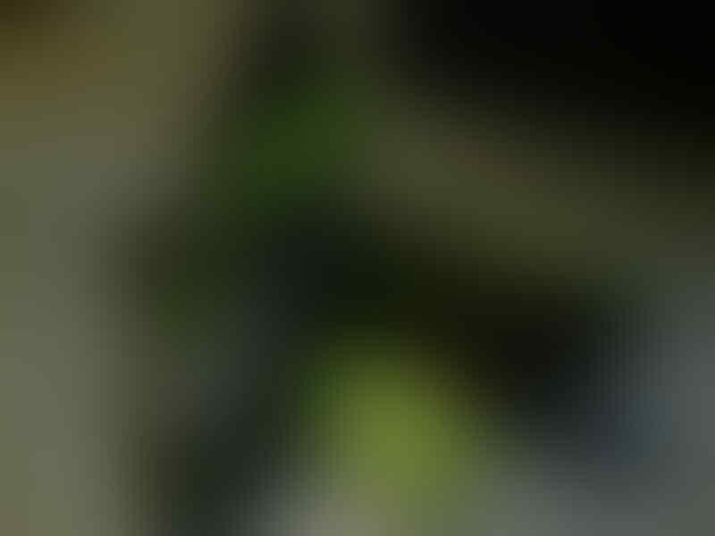 Jual Sepatu Nike Paul Rodriguez Kaskus KW Super