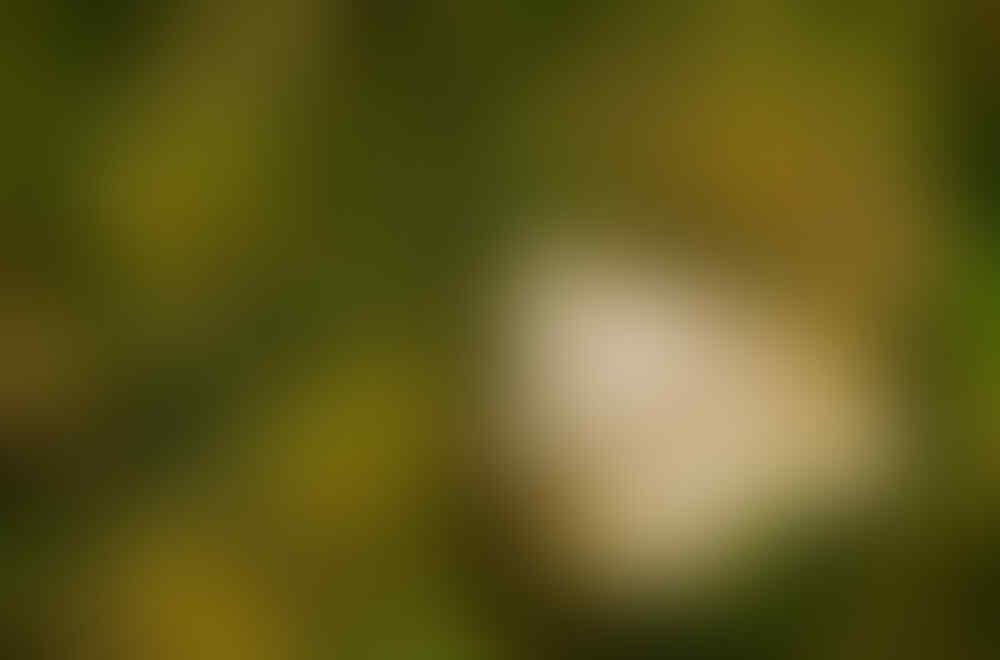 Nongkrong Bareng, Yang Masih Amatiran dan Newbie - Part 5