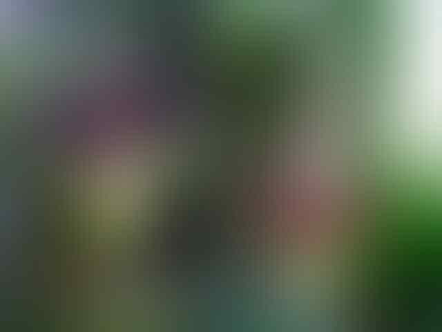 Fakta tentang Bunga Bangkai (Amorphophalus)