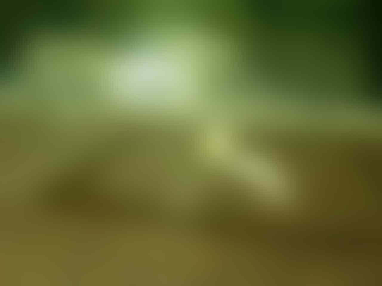 Microworm untuk Pakan Burayak/Anak ikan hias Cupang, Platy, Molly, Guppy
