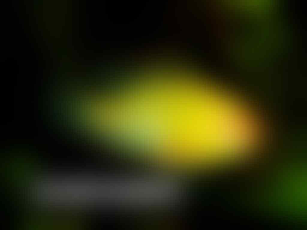 Ikan Hias Aquascape (RedNose, Cardinal,Neon Tetra,dll)