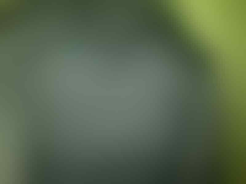 JUAL JAKET FORMAL DAN SEMI FORMAL IMPORT BOSS CLASSIC BNWT TANGERANG