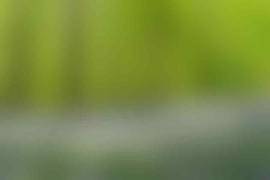 Hutan berwarna Hijau? Uda biasa gan. Lihat warna Hutan ini Gan