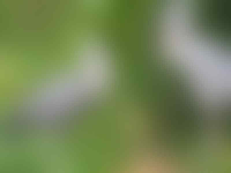 Yakin Pernah Liat 'Burung' yang Ini Gan? Yuk Intip!