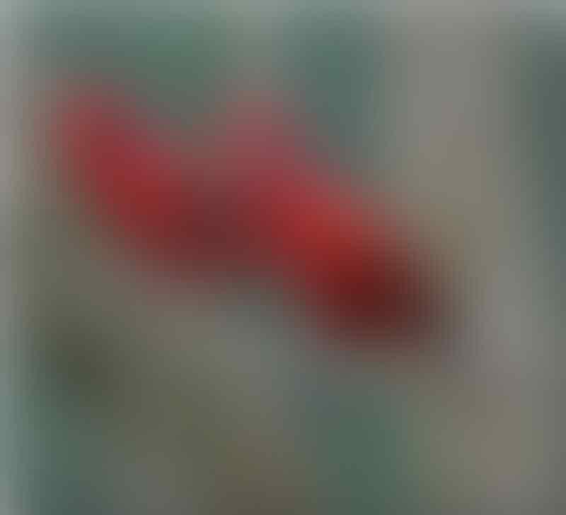 Jenis Burung Langka dan sangat indah ini Berasal dari Indonesia