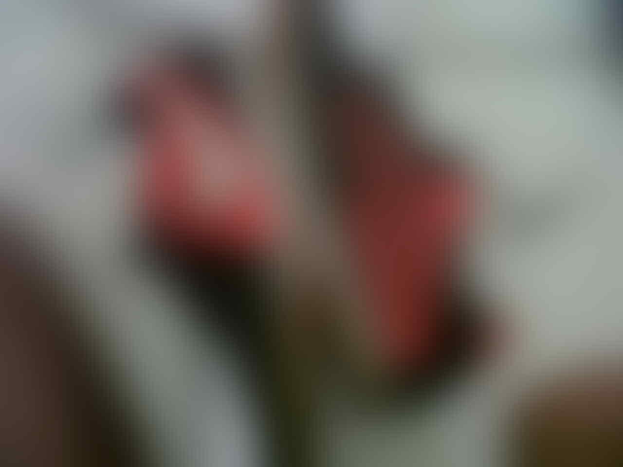 [WTS] Sepatu futsal Nike Ctr 360 ori 2nd size 44