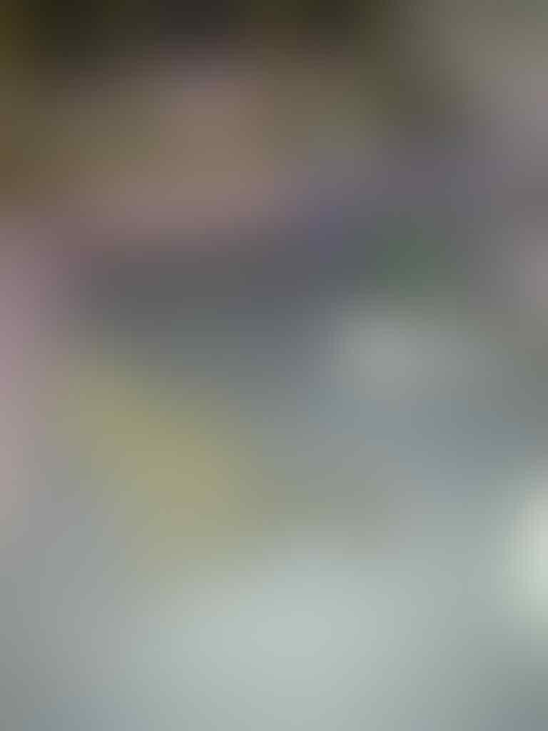 semi hibah kucing persia medium 1,5 tahun