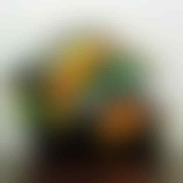 "[ Jual ] Helm KYT Rc7 Custom motif Rossi Winter Test "" Grey """