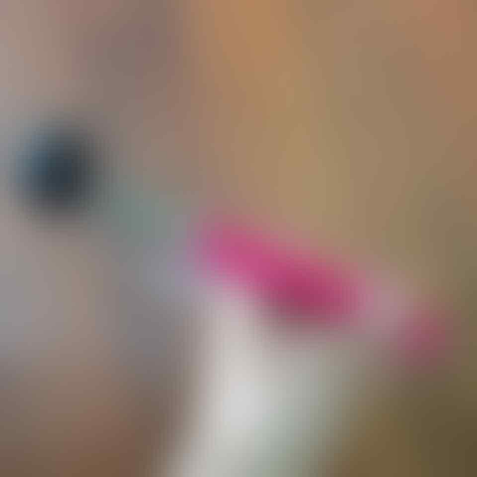 Selfie Monopod (Tongsis) With U Holder