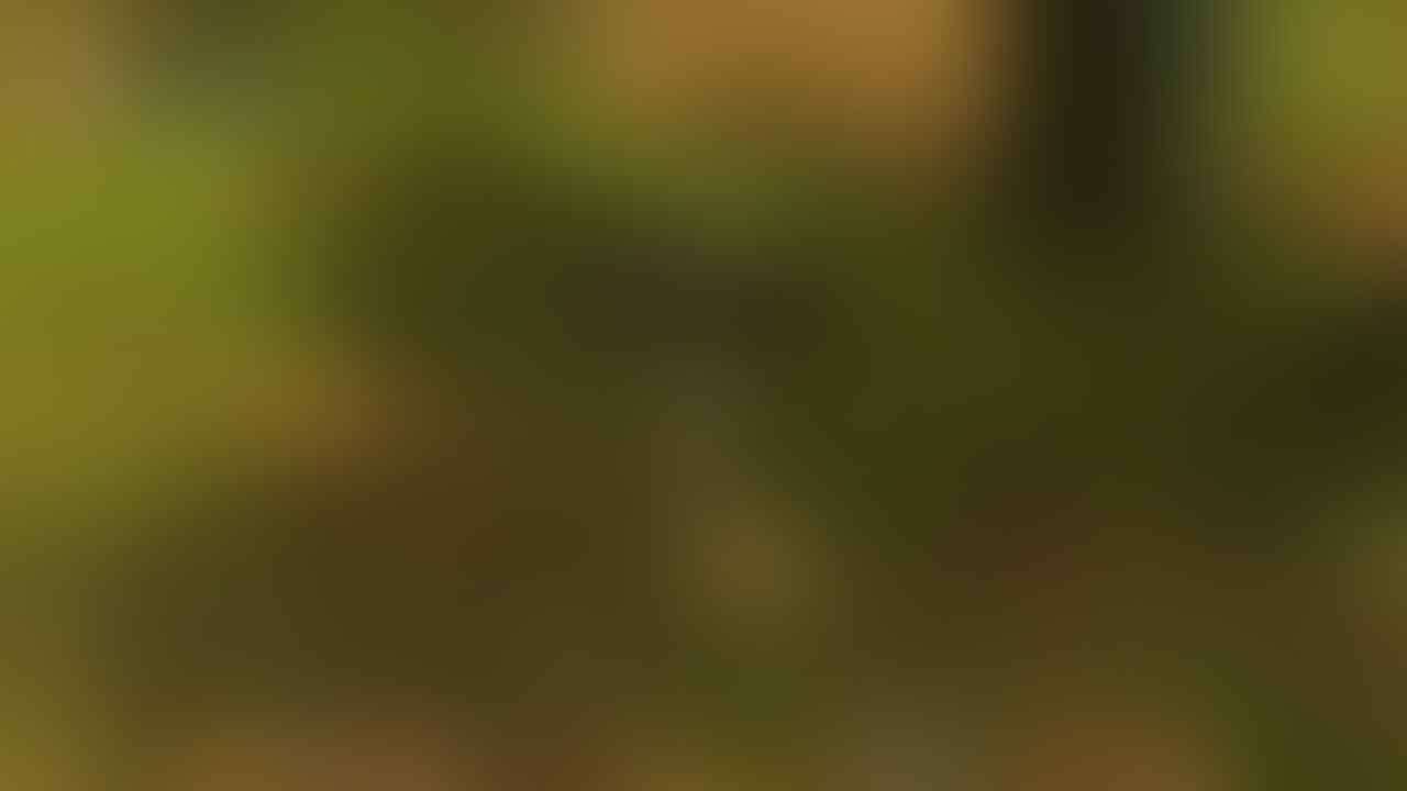 [PuumaTech] Jasa Joki RAGNAROK 2 (RO 2) Indonesia! RECOMENDED SELLER!!