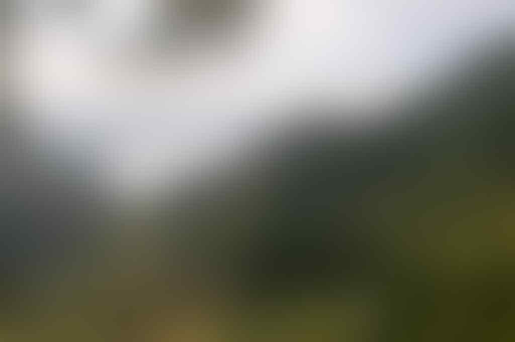 Horas Samosir Fiesta 2014: Samosir Austrian Tobatak Orchestra 2014 di Samosir