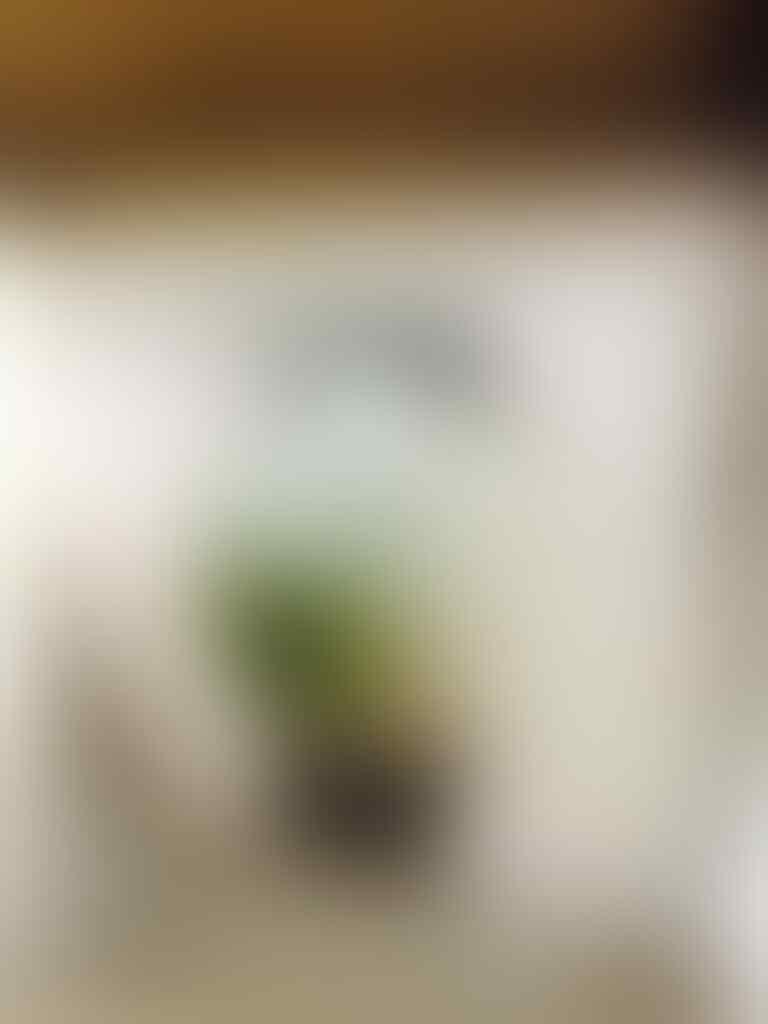 Jam Tangan Calvin Klein K2Y2X1C3 Men Watch - murah