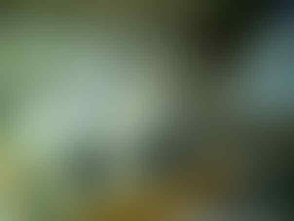 ۞ SEPATU KERJA PANTOFEL KULIT MURAH GRATIS ONGKIR ۞