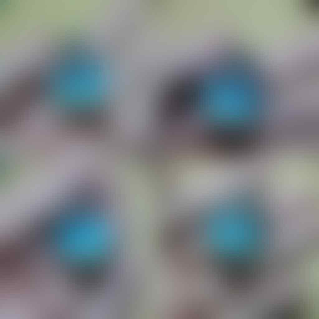 LELANG AWAL BULAN BATU CINCIN SUPER PREMIUM + TITANIUM OB CM 30K ! CLOSE 4-7/ 22.15