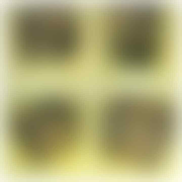 LELANG ULANG AKIBAT HUMAN ERROR(SOLOK,PW,LUMUT,DLL) CLOSE 20/10 22:00 AUTOCLOSE