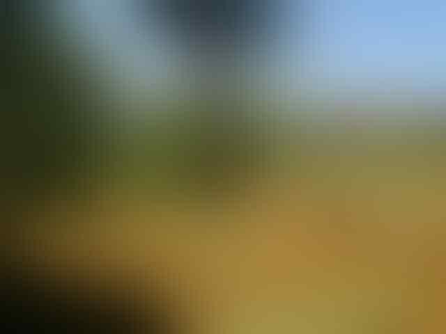 **** Dijual tanah! Luas tanah 13330m2 - Lokasi: Ciherang Pondok Kabupaten Bogor ****