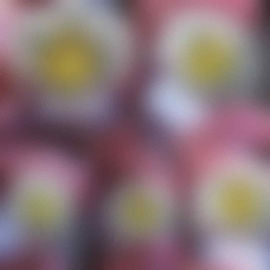 LELANG BATU FO VS BACAN, DLL OB RENDAH NB 10RB END 08-05-2016 20.00