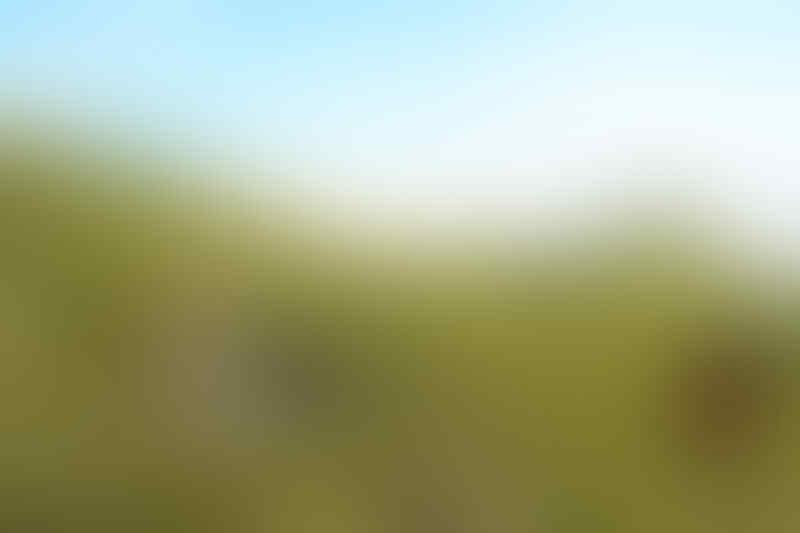 Merbabu via Pogalan