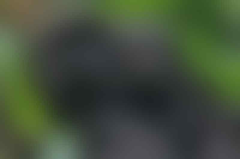 Ini Lho 15 Jenis Monyet Dunia Baru! Siapa Tahu Cocok Buat Agan