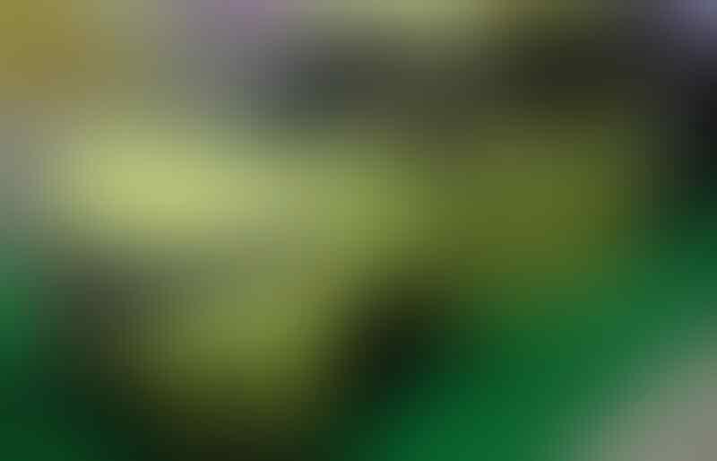 Lucu Gan! Honda Freed Disulap Jadi Mobil 'Mancing'