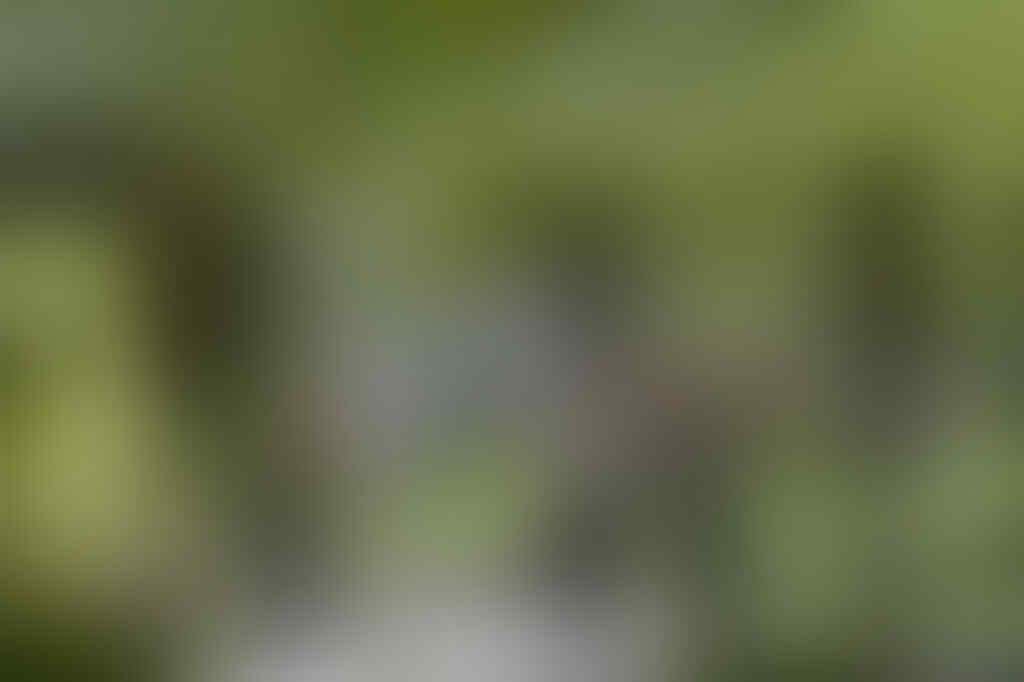 Presiden Gelar Silaturahmi dengan Pimpinan Lembaga Negara Siang Ini