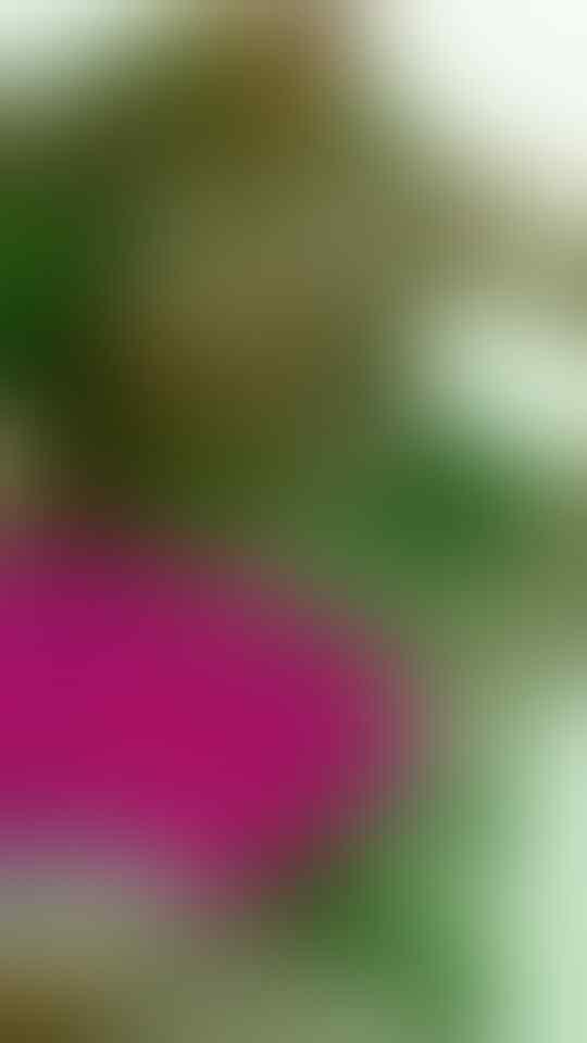 Ide Pramugari Berbikini, Bikin Phuong Thao Jadi Milyuner Dunia