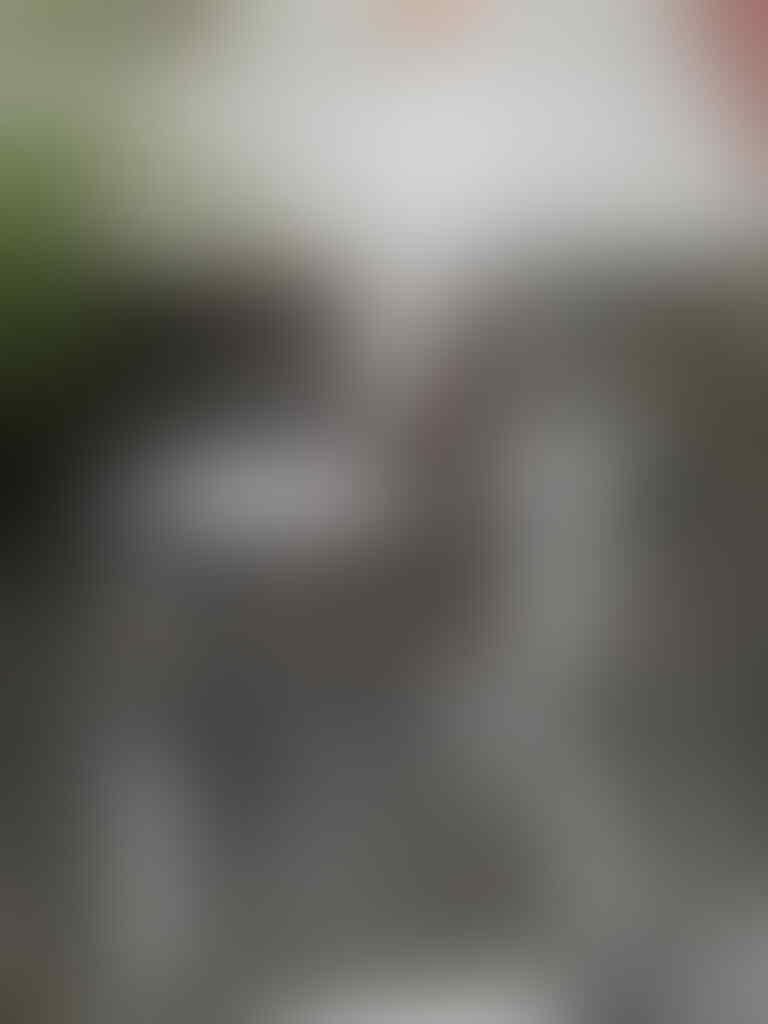 thread khusus burung hantu (owl) kaskus - Part 5