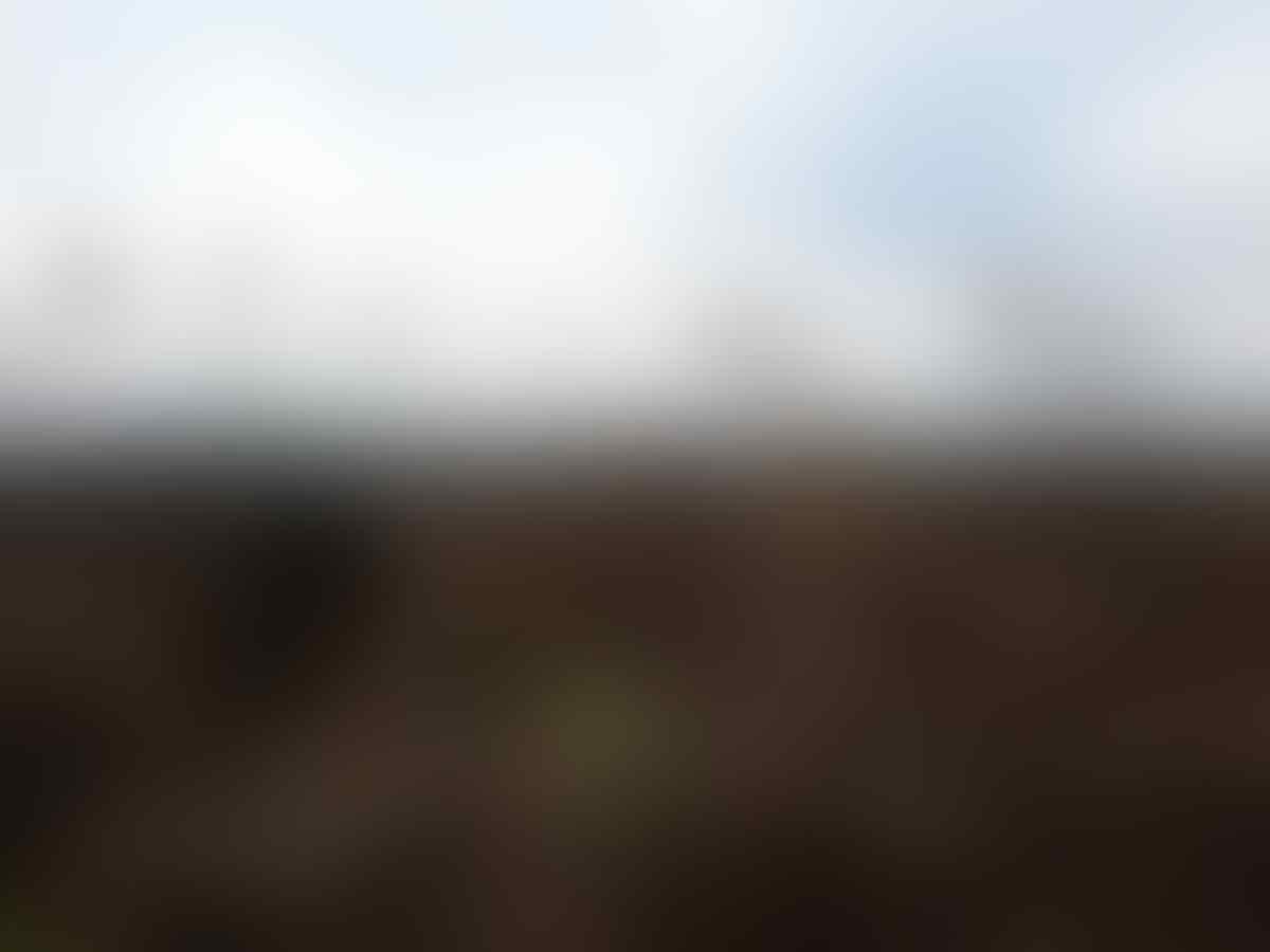 PT.RAPP Kalah di PTUN, Hukum Masih Berpihak Pada Masyarakat Gambut